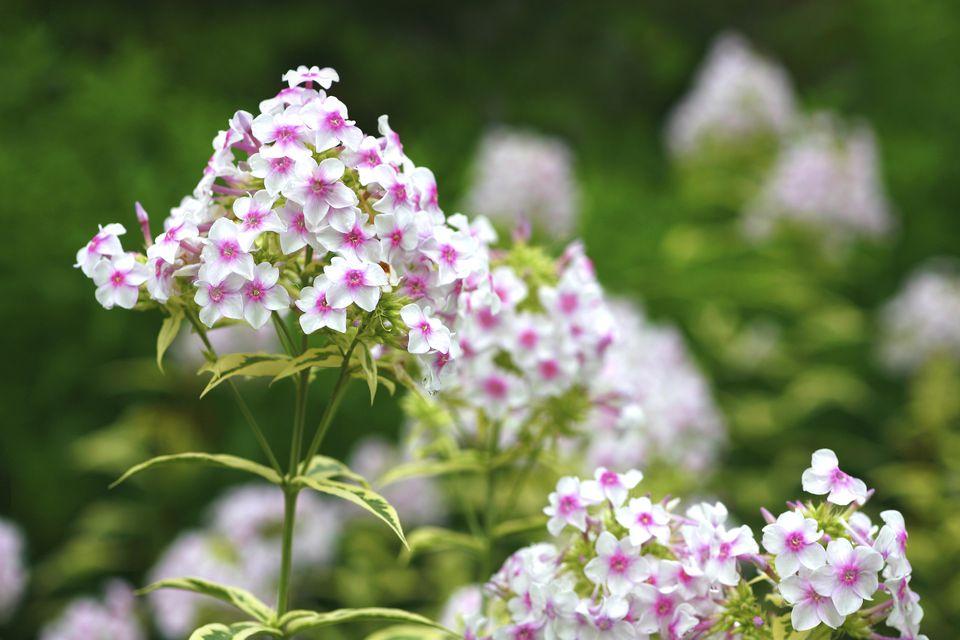 11 landscaping ideas for flower beds year round color. Black Bedroom Furniture Sets. Home Design Ideas