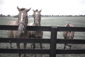 Thoroughbreds, Brookside Farm, KY