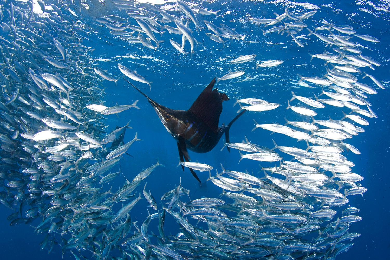 What saltwater fish eat in nature for What do wild fish eat