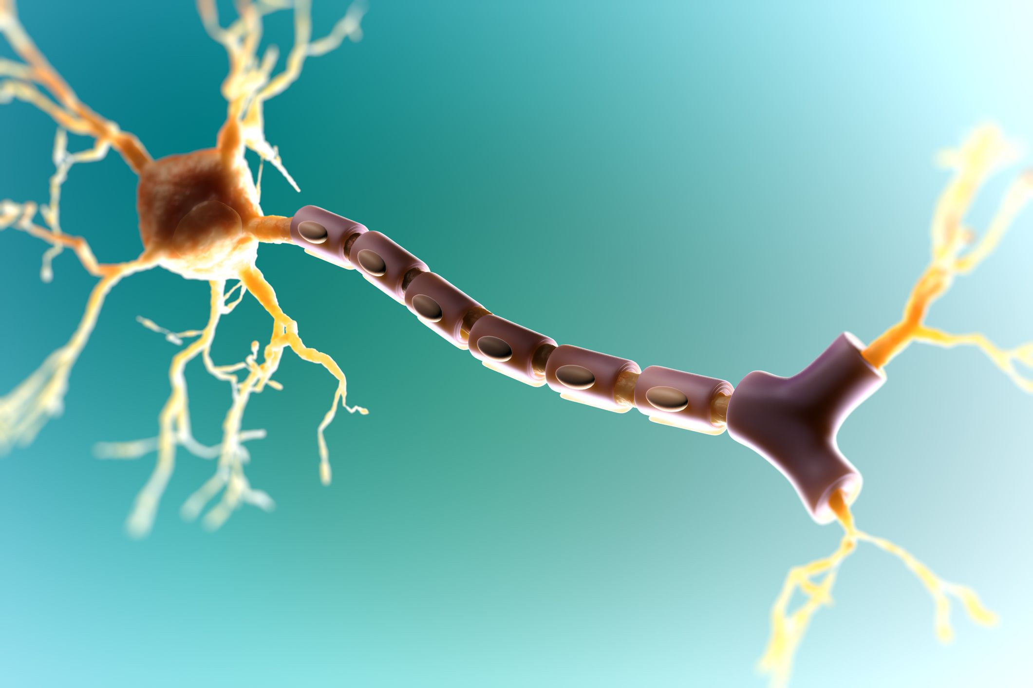 Myelin Repair In Multiple Sclerosis A Focus For Research