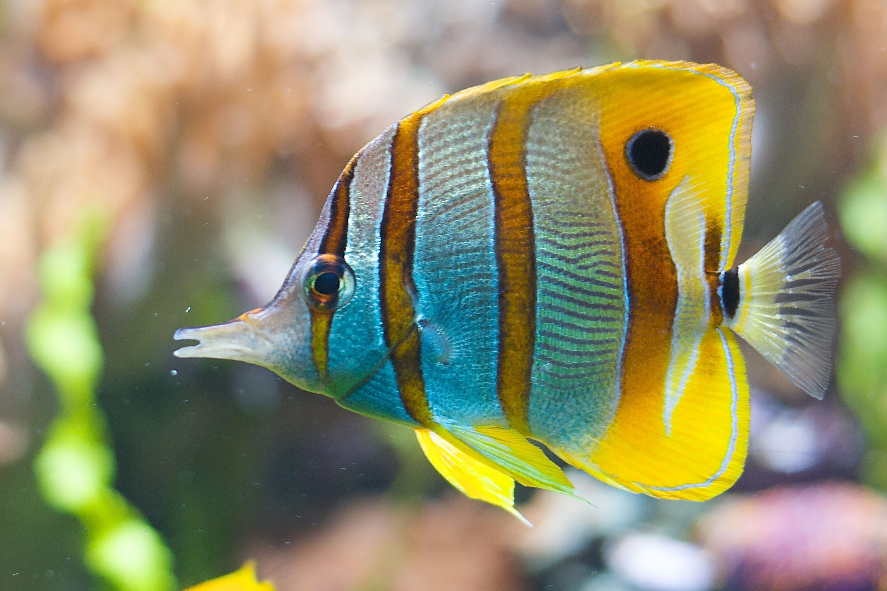 Tips on moving reef tank with saltwater fish for Saltwater reef fish