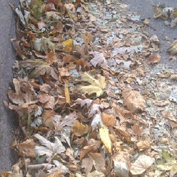 Autumn Leaves in Road