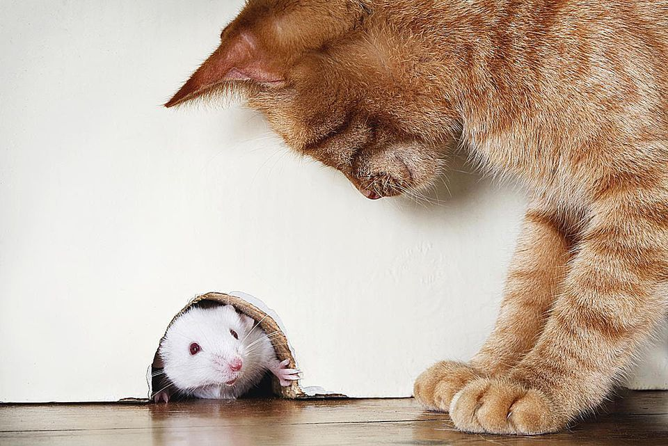 A Cat and Mouse Game?