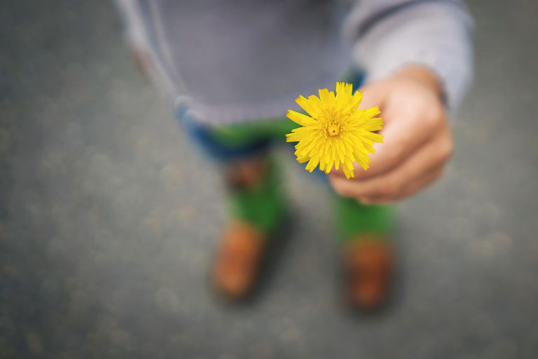 boy offering yellow flower