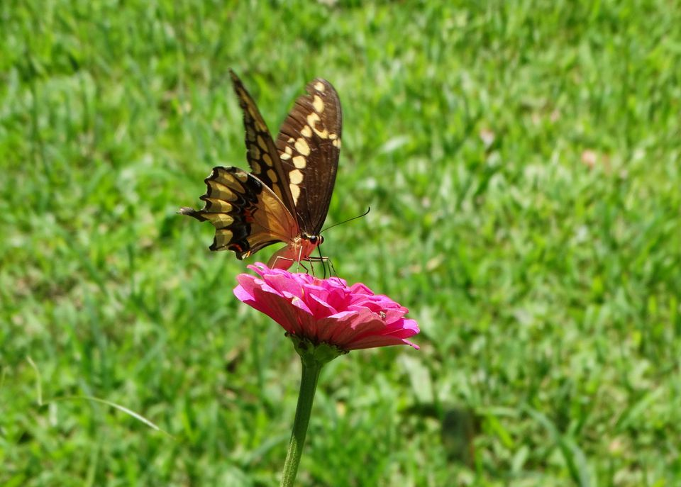 Butterfly and flower at the PV Botanical Garden