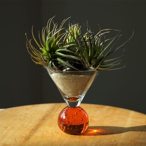 container gardening picture of of tillandsias in a martini glass