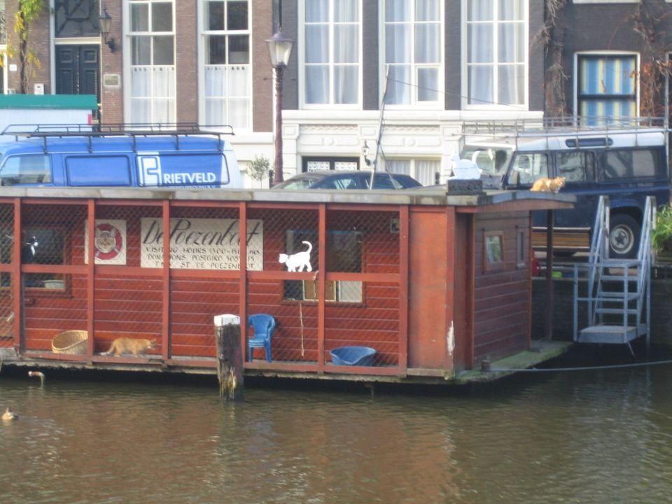 Poezenboot (Cat Boat)