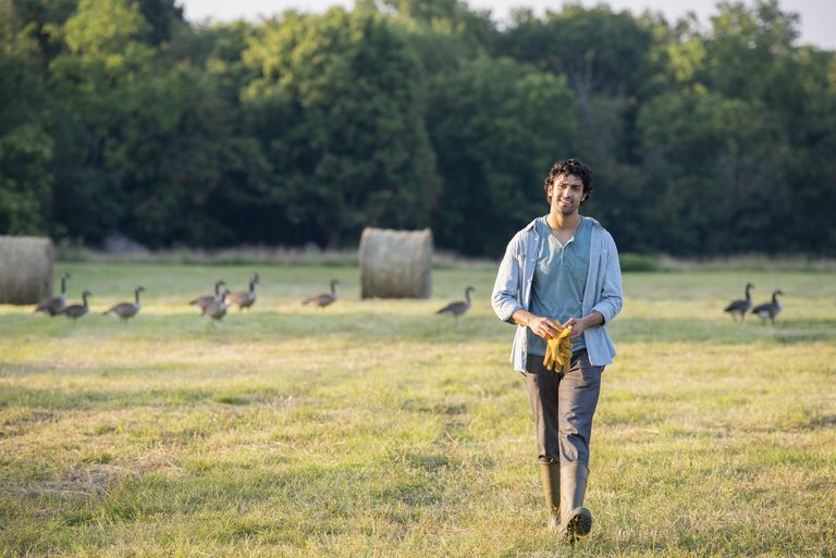 A man walking across a field,away from a flock of geese outdoors in the fresh air.
