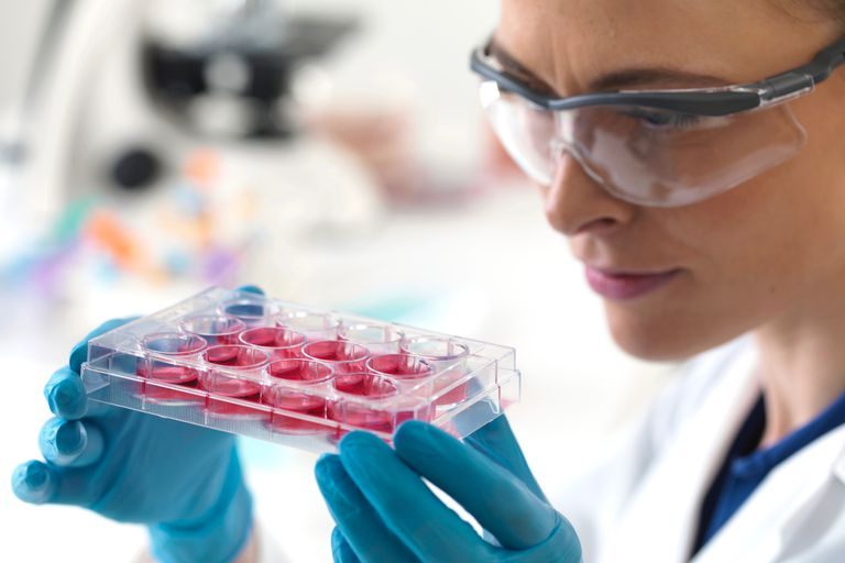 Scientist holding a multiwell tray containing stem-cell samples.