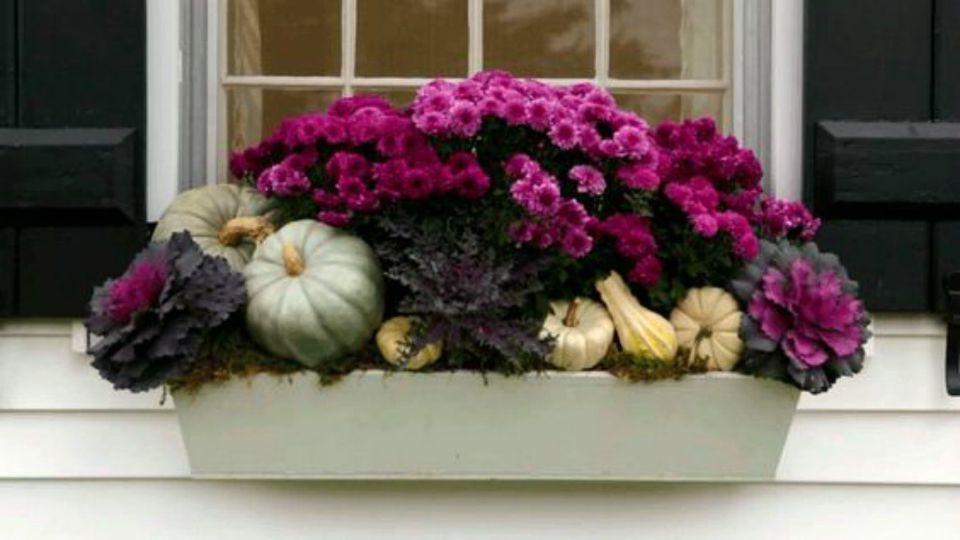 fall window box with purple