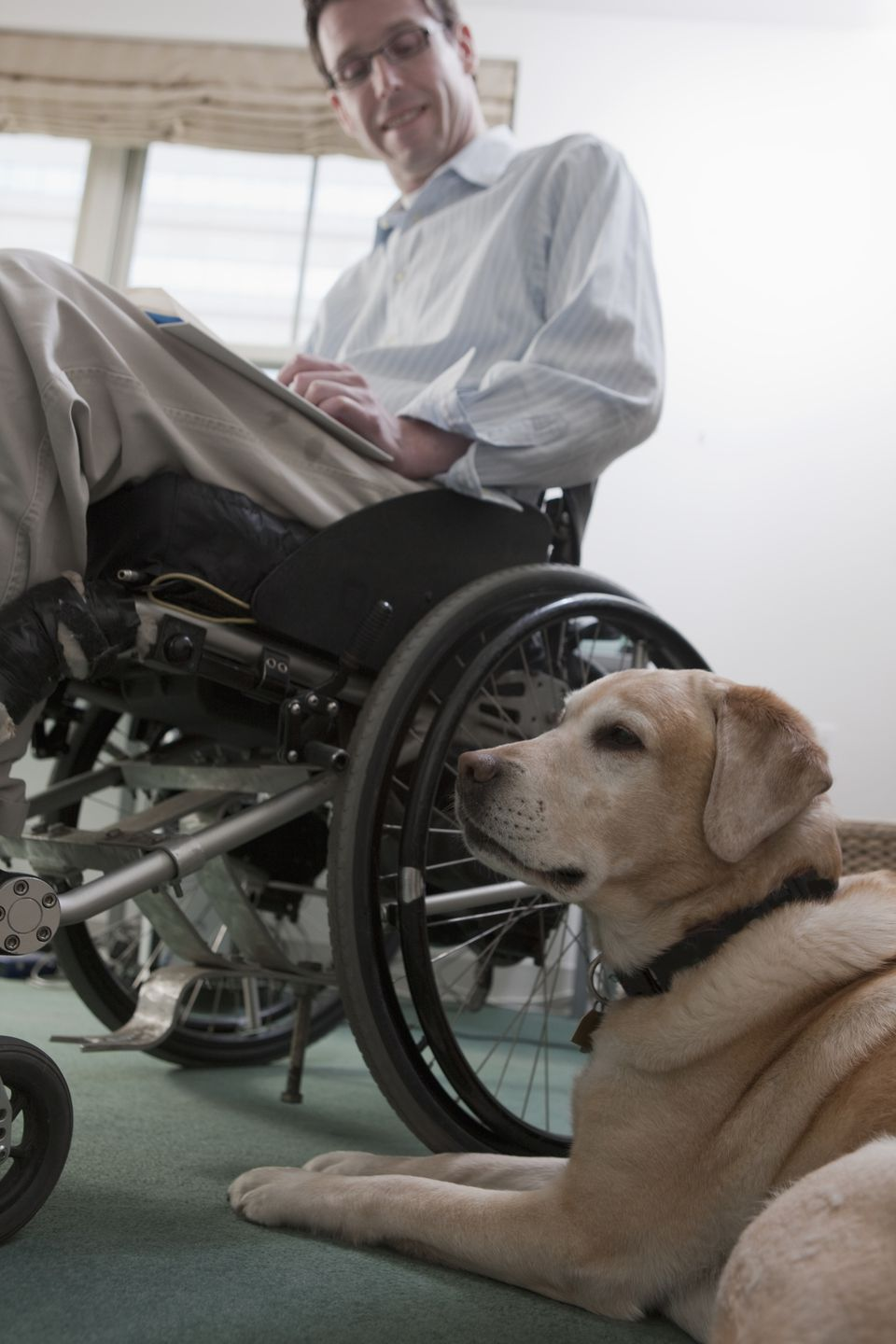 A dog sits on the floor near a man in a wheelchair.