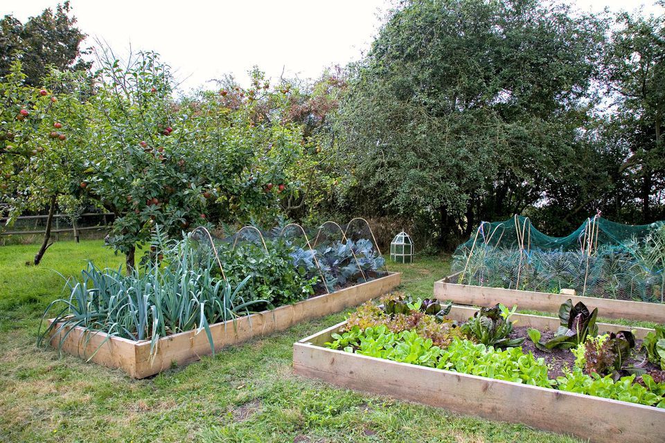 Tips for building a low maintenance raised bed for Low maintenance vegetable garden ideas