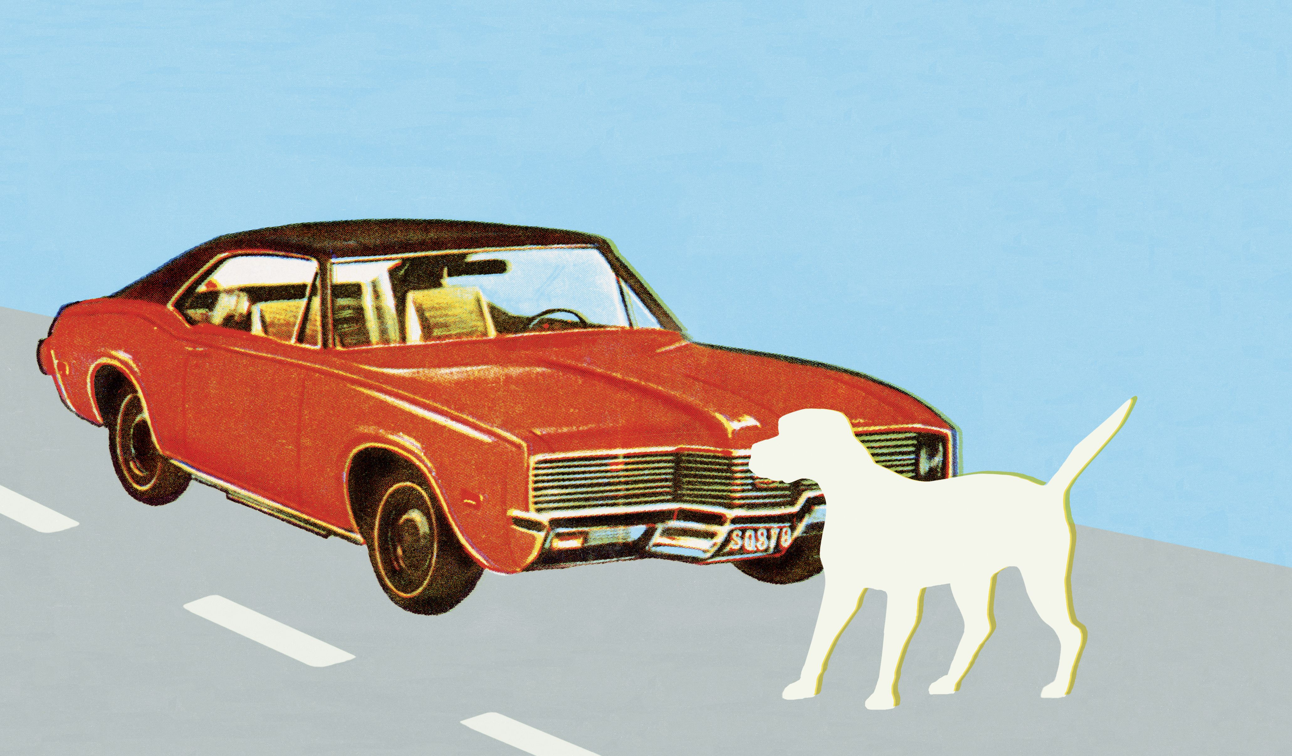 what to do if you hit a dog with your car