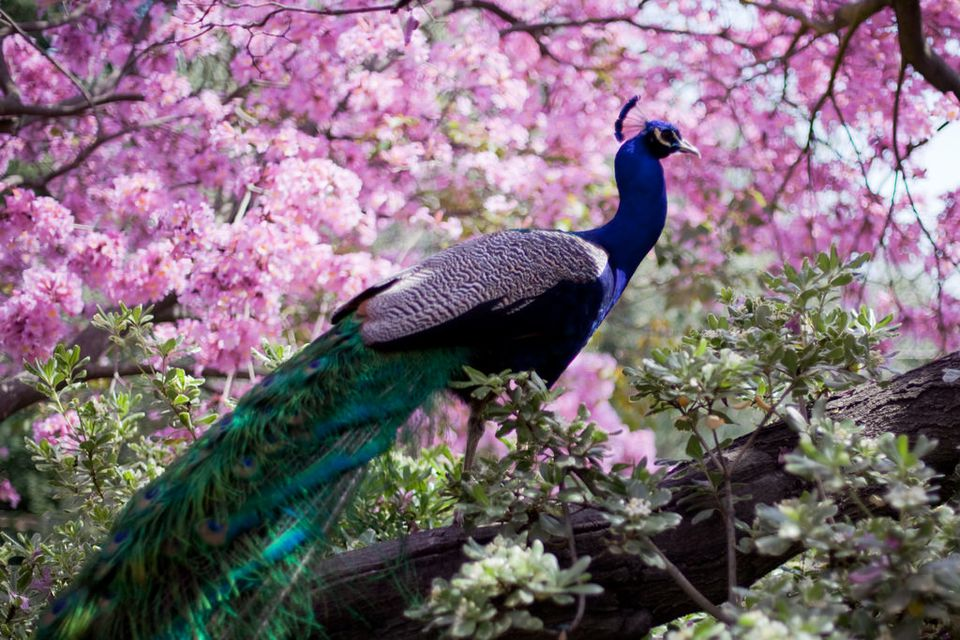 LA County Arboretum And Botanic Gardens
