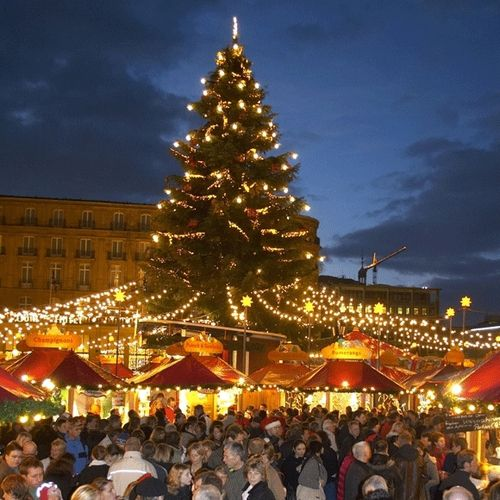 christmas market cologne boasting the largest christmas tree in the region - German Christmas Tree