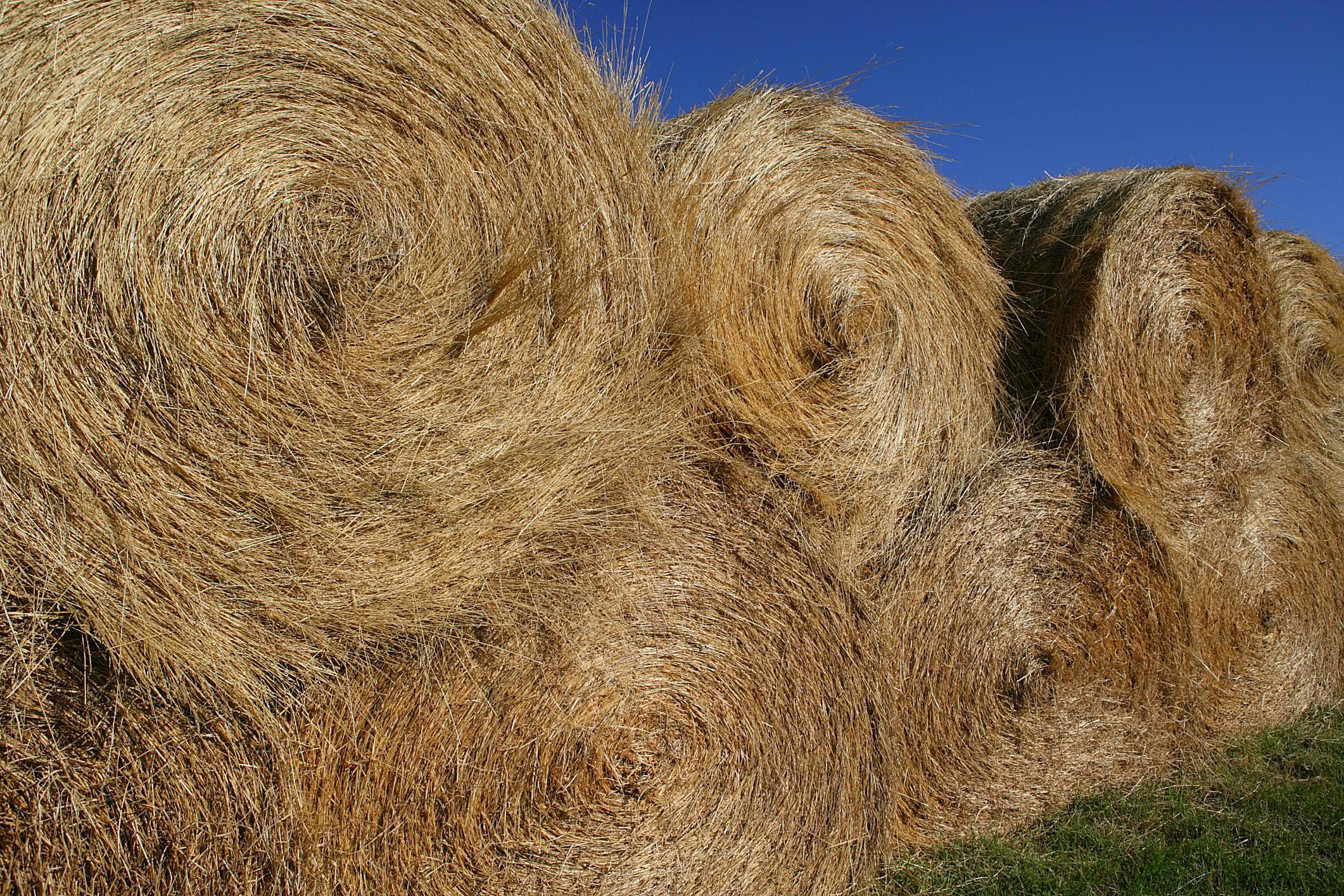 All About Feeding Horses Hay Index Of Faqs