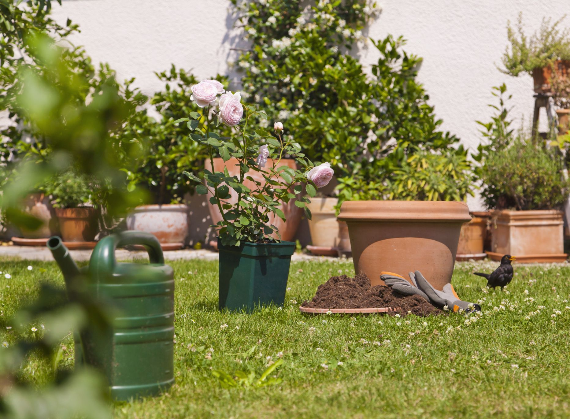 Reglas de jardiner a para principiantes y aficionados - Todo sobre jardineria ...