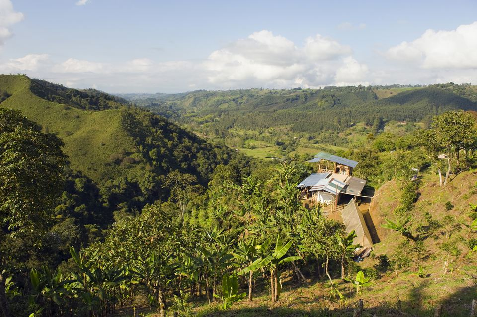 Finca Don Eduardo, coffee farm, Salento, Colombia