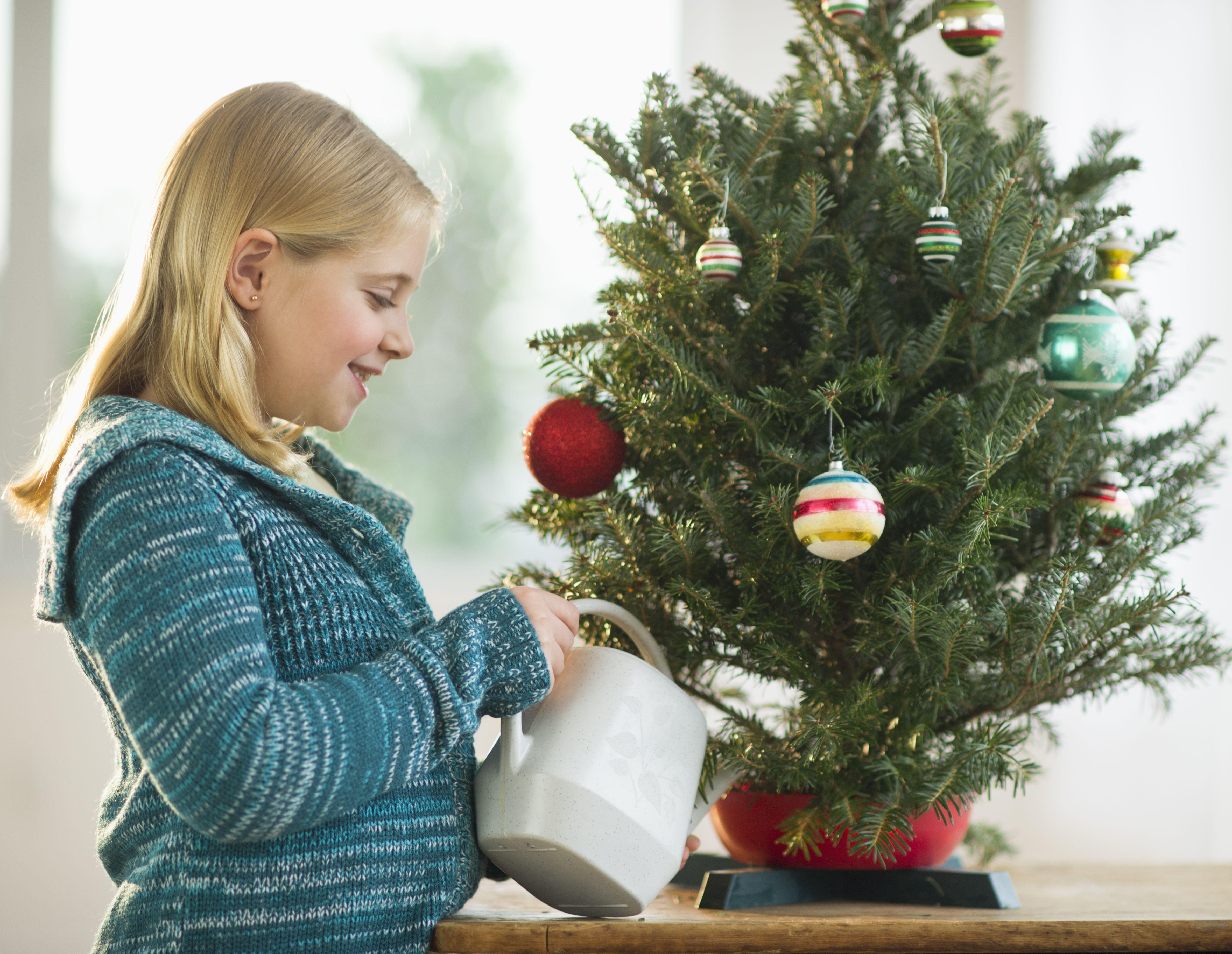 Non-Toxic Christmas Tree Food