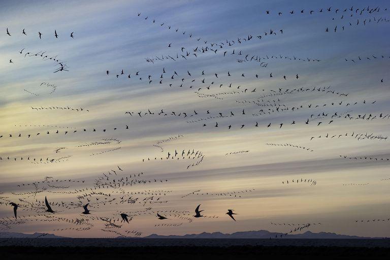 Bird Formations
