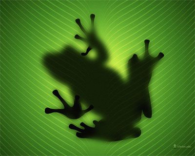 Picture of a frog on a green surface from Vladstudio