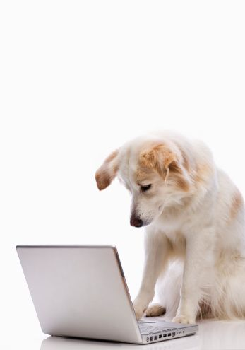 Dog looking at laptop