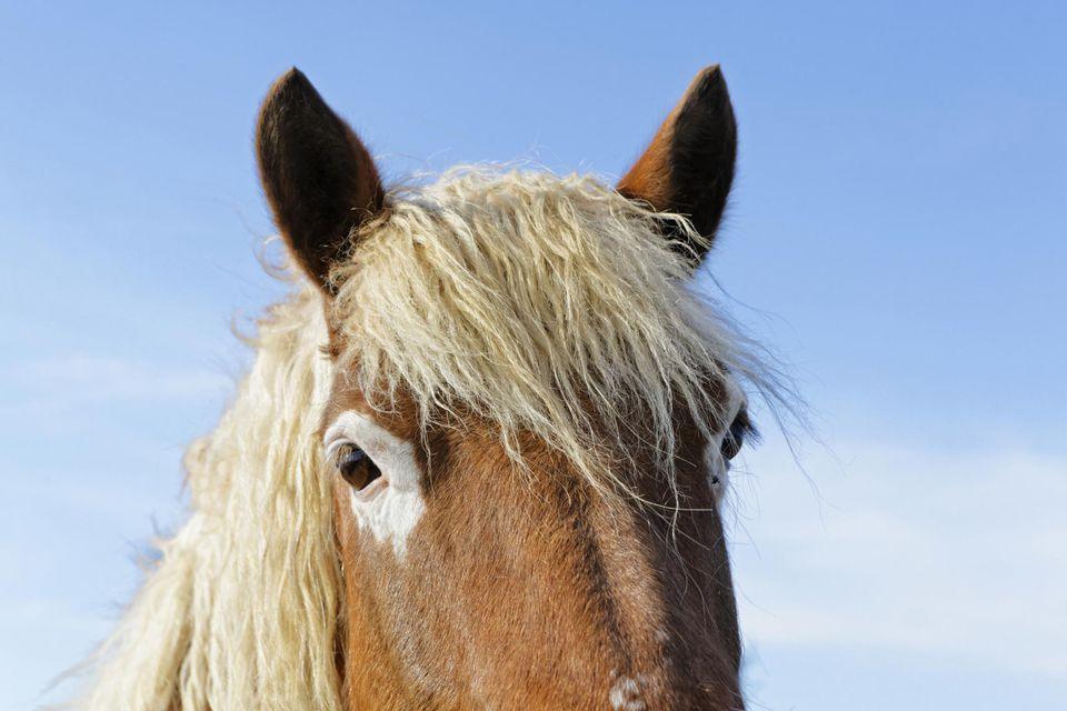 Head horse close-up