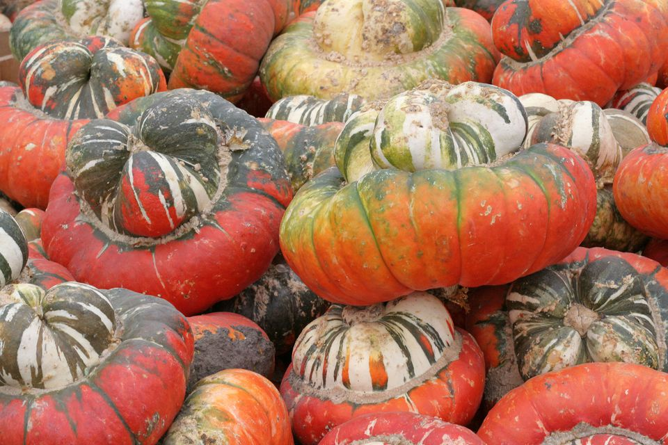 The Ultimate Guide To Pumpkin Types And Varieties