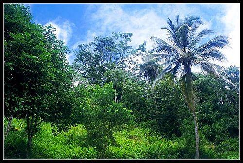 Nicaragua Travel: Ometepe