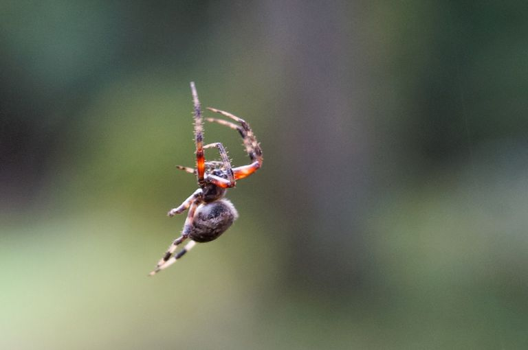 Spider close-up.