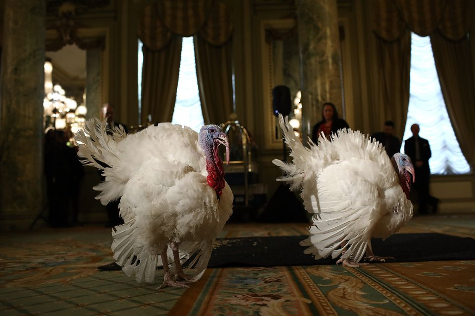 Turkey pardon DC