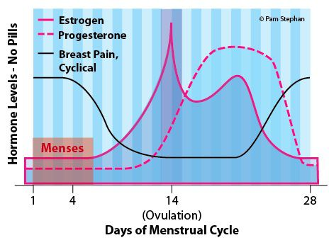 Cyclical Breast Pain and Menstrual Cycle