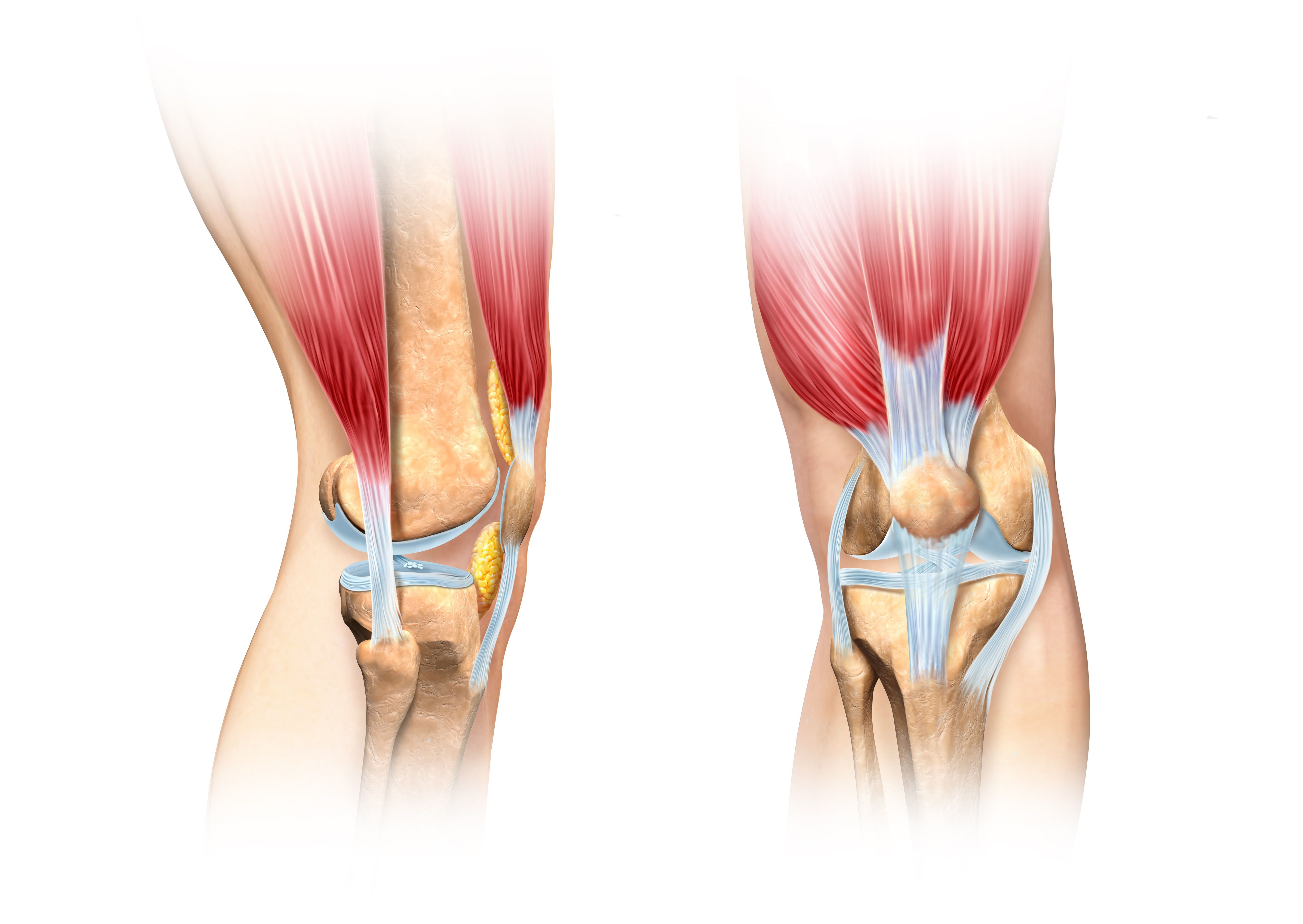 Blown out knee joint knee anatomy artwork ccuart Image collections