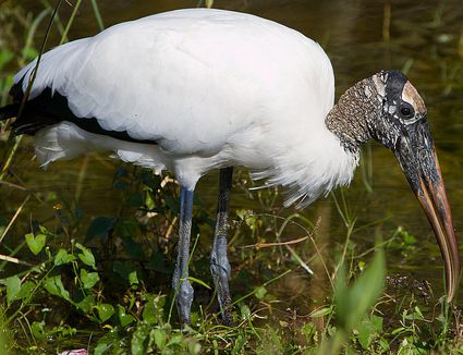 Fledgling Bird Definition - Baby Birds