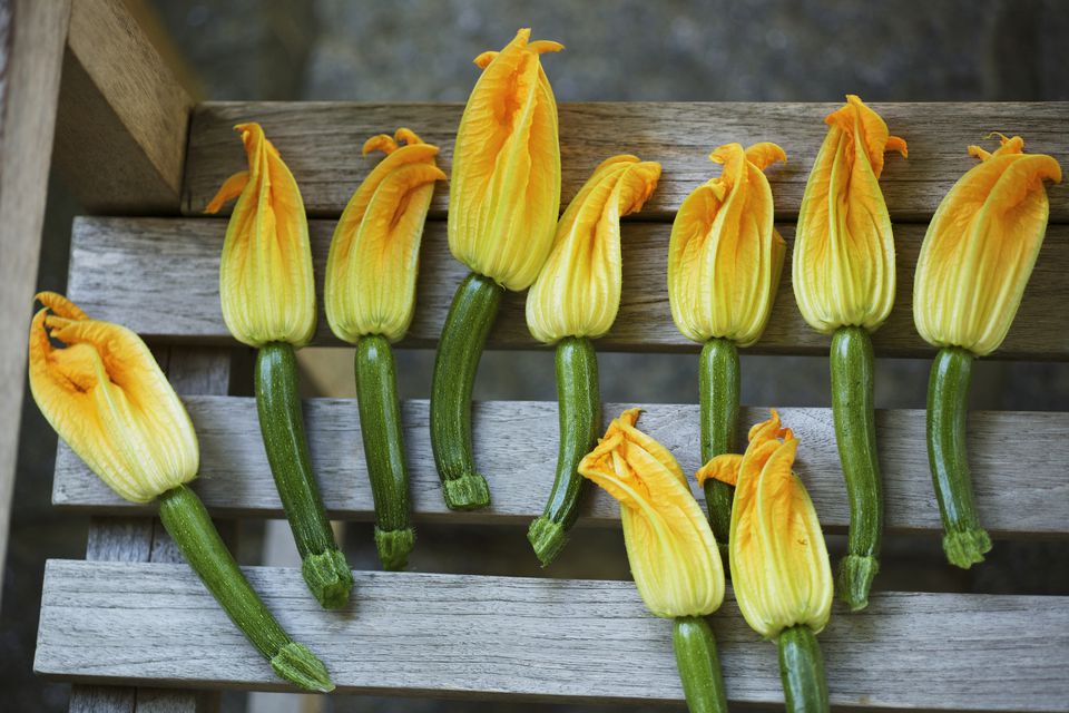 Summer Squash with Flowers Attached