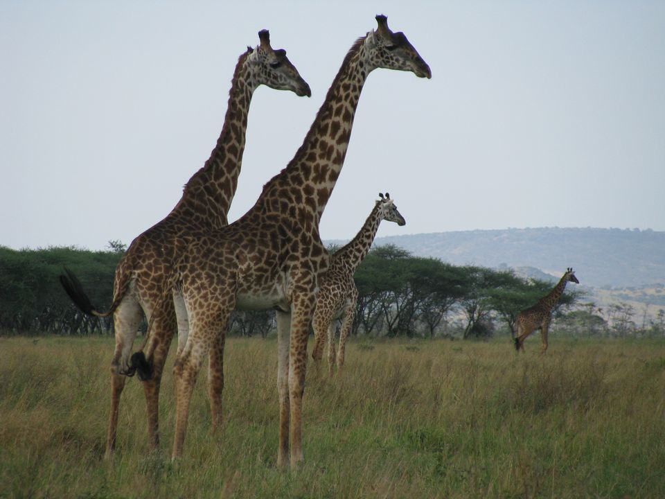 Serengeti National Park Information Facts Images - 9 things to see and do in serengeti national park