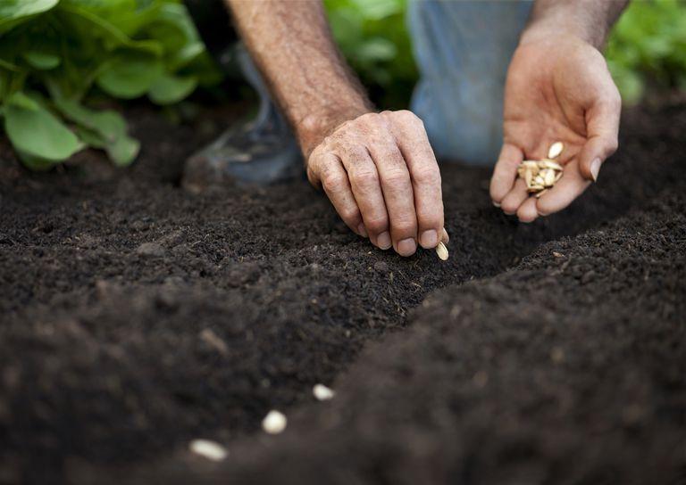 A man planting pumpkin seeds.