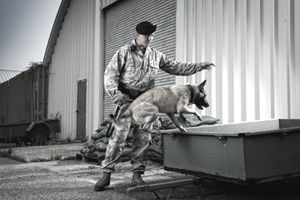 Male Air Force Security Forces Airman in uniform gives his military working dog a command to jump.
