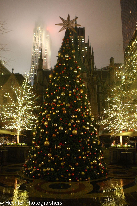 New York Palace Christmas Tree