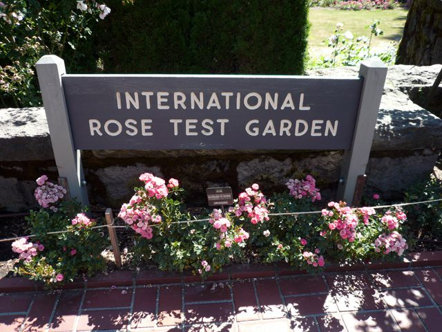 Roses In Garden: Fun Things To Do At Washington Park In Portland Oregon