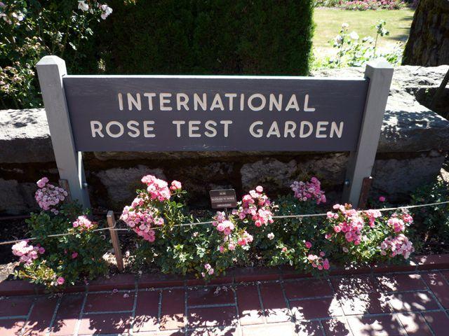 Fun things to do at washington park in portland oregon - International rose test garden portland ...