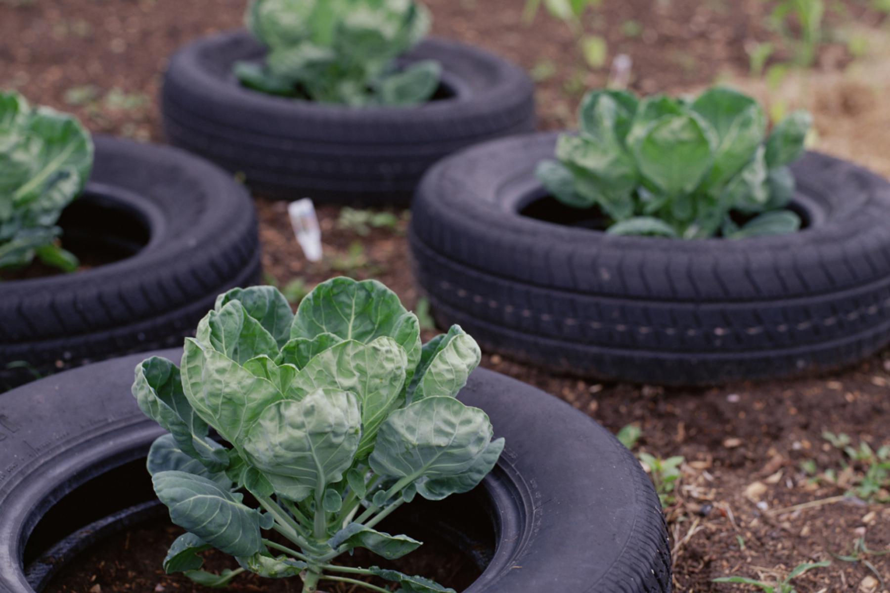 smart pots are smart for vegetable container gardening