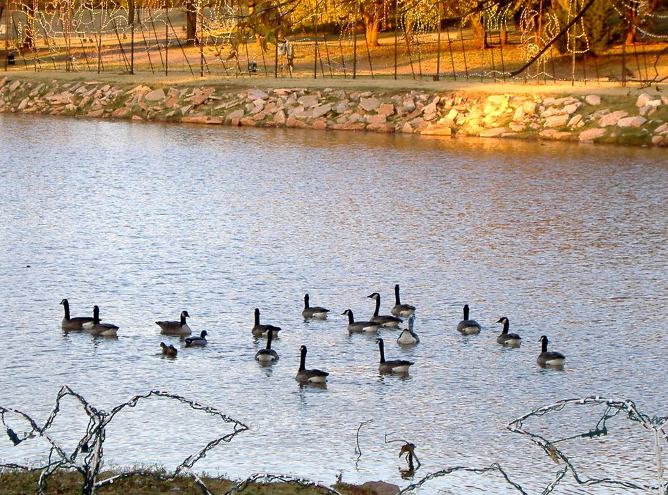 Yukon Duck Pond