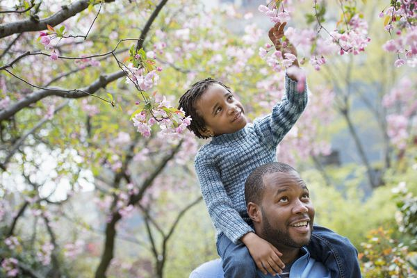 A New York city park in the spring. Sunshine and cherry blossom. A father giving his son a ride on his shoulders.