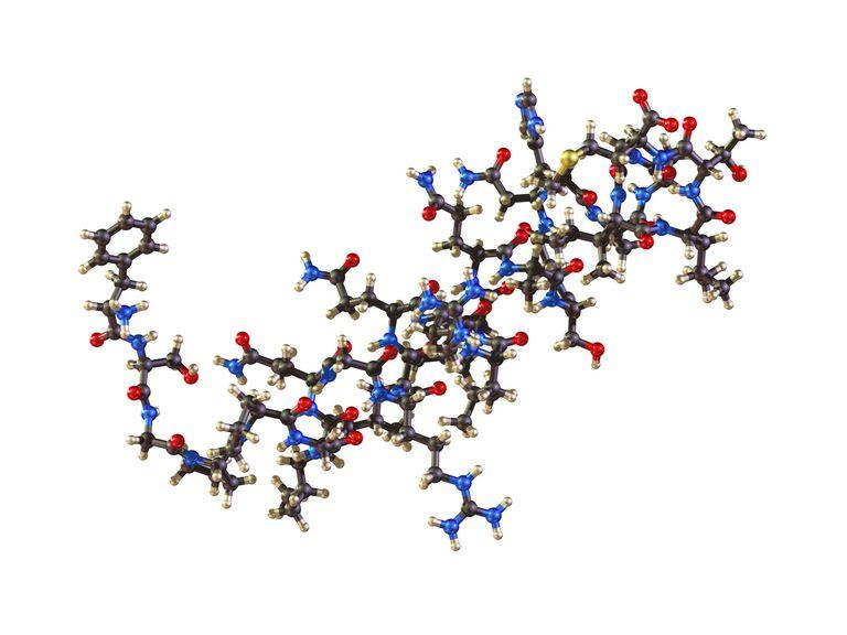 Molecule of Orexin
