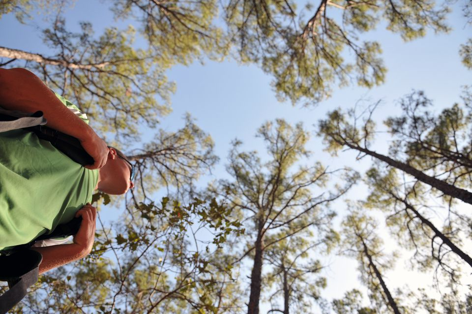 A backpacker stands under the tall pine trees at Bastrop State Park.
