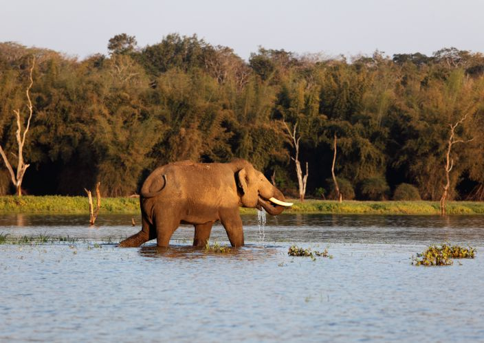 Elephant at Nagarhole.