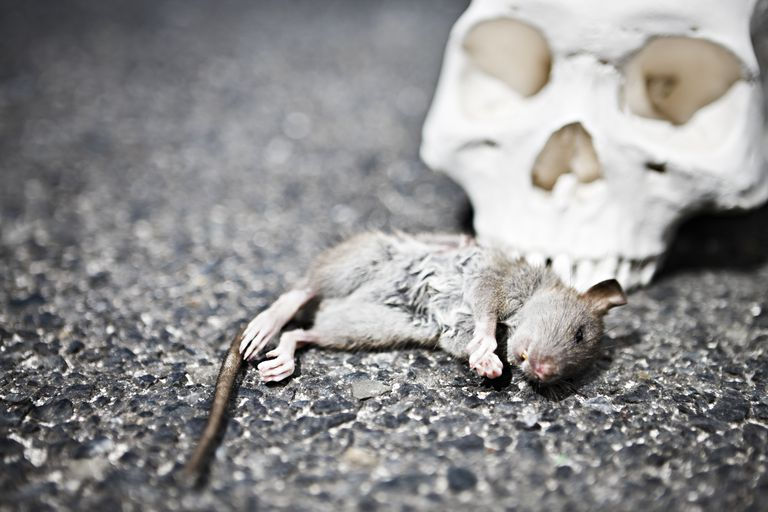 Rigor mortis can be used to provide clues to time of death.