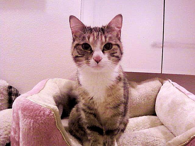 Tatiana, a Cat With FeLV