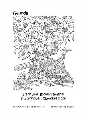 Georgia State Bird And Flower Coloring Page